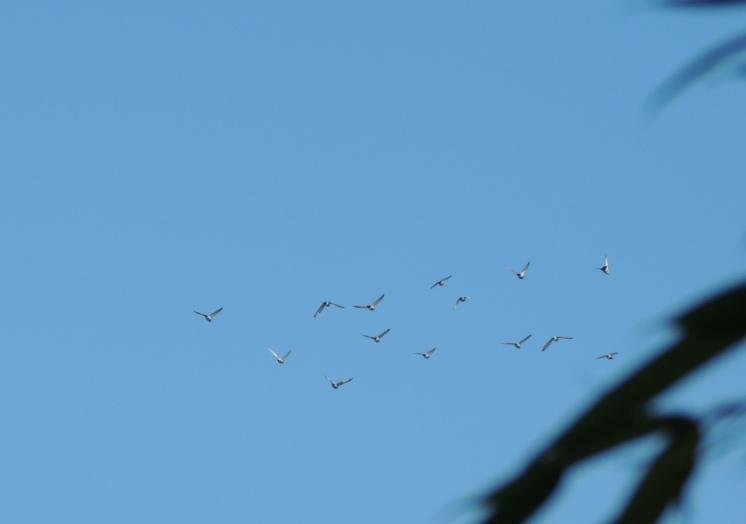 und die Vögel ziehen über mich hinweg