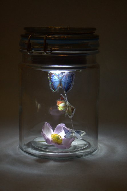 Schmetterlinge im Glas