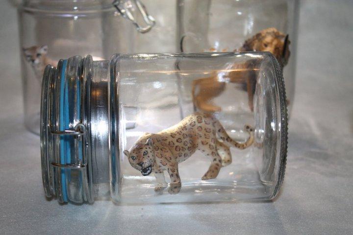 Tiere im Glas 1