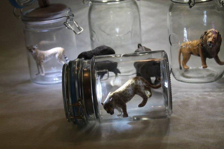 Tiere im Glas