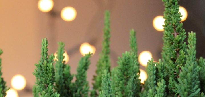 Habt ihr schon weihnachtlicheGefühle?