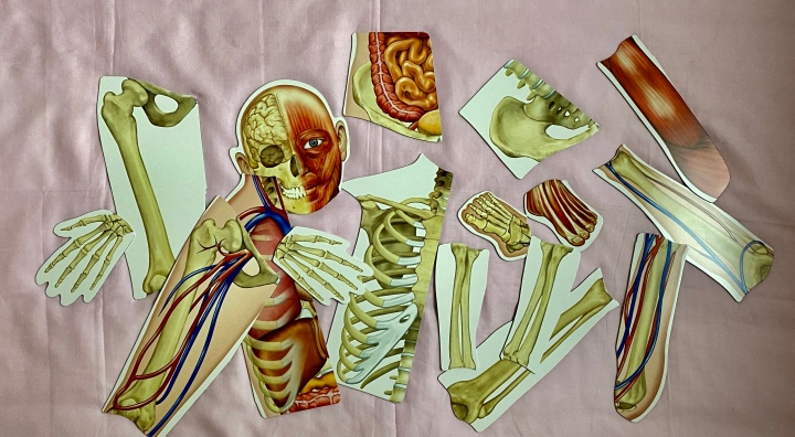 A wie Anatomie
